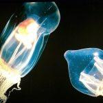 I pesci luminosi degli abissi: perché si illuminano, e come?